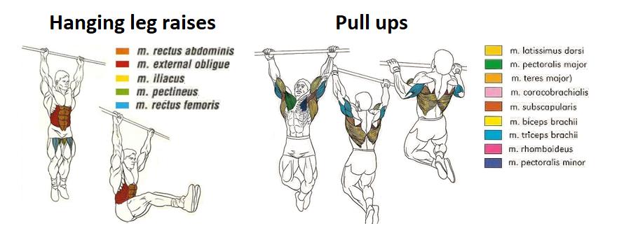Zapojené svalové skupiny